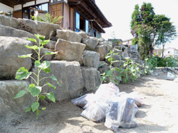 sakaecho20110828_02.jpg